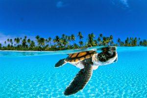 French Polynesia - Xenos Travel